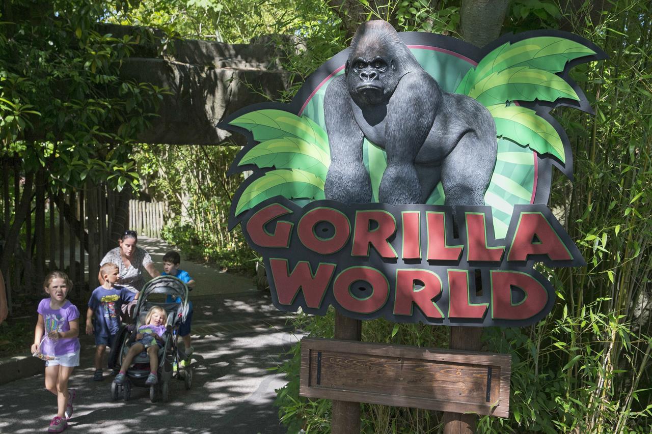 No Public Events At Ohio Zoo Where Gorilla Killed 1 Year
