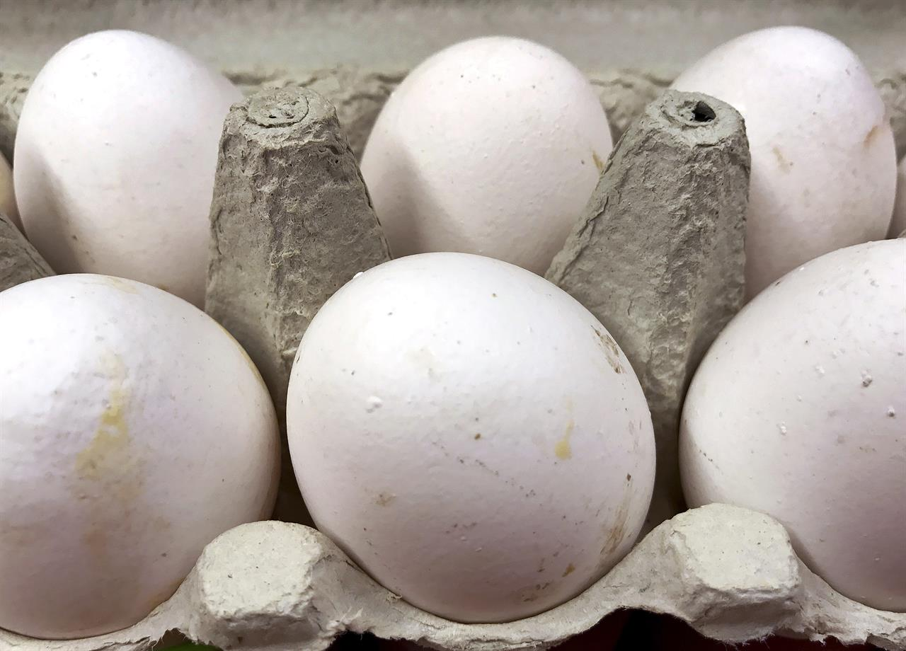 Belgium says Dutch found tainted eggs back in November | AM