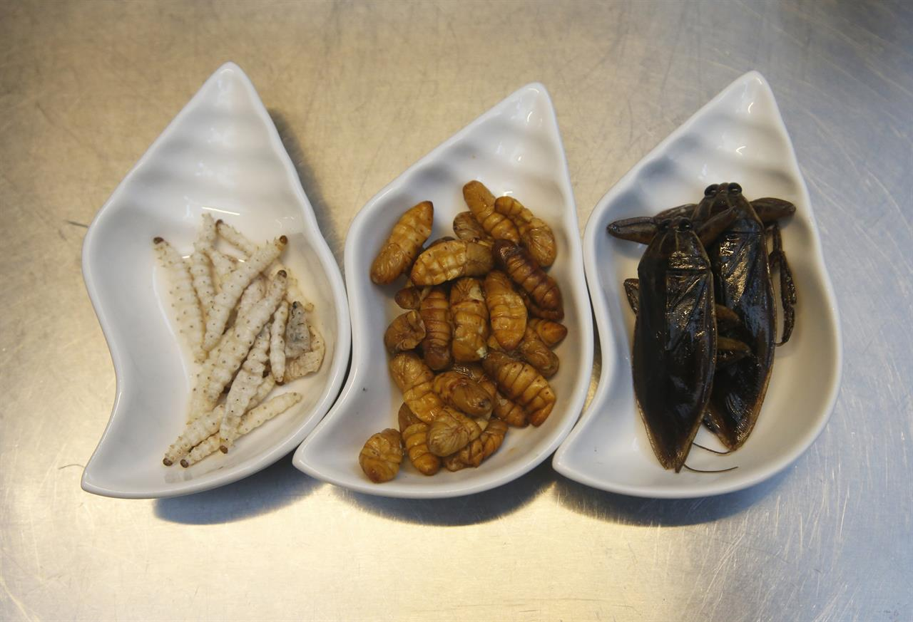 bugs are in the food by design at bangkok fine dining bistro