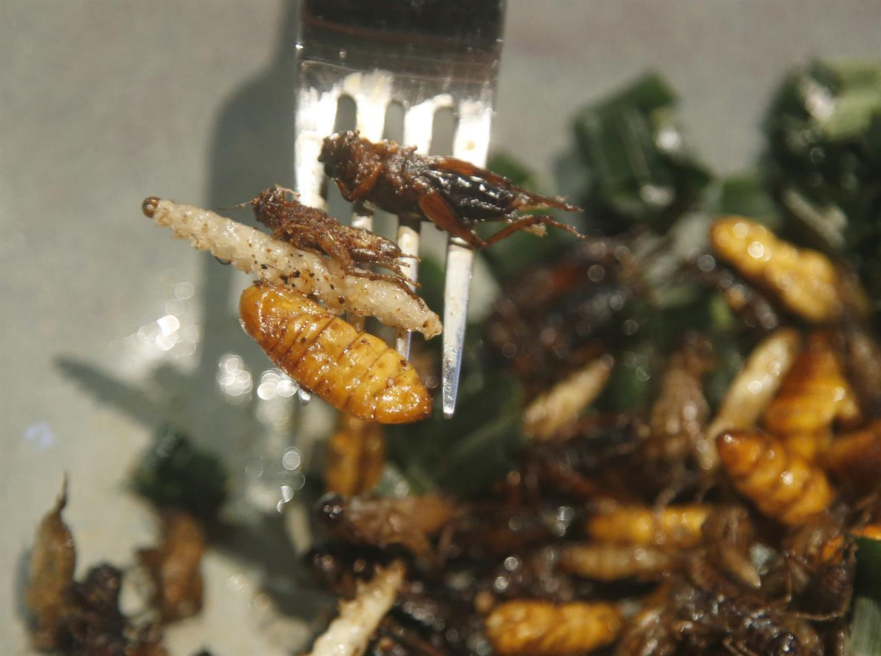 bugs in the food is by design at new bangkok bistro tampa fl