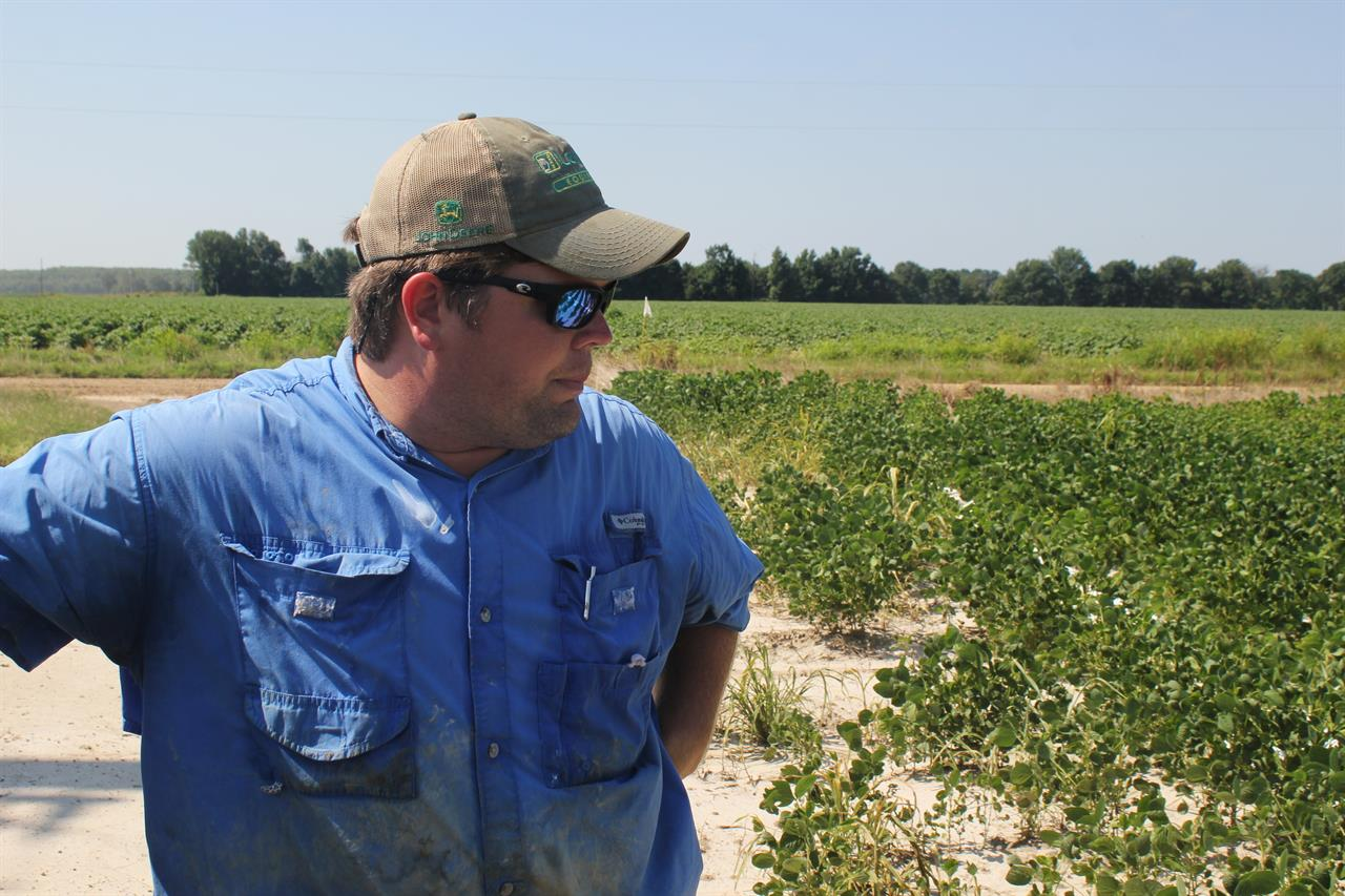 Minnesota announces restrictions on using herbicide dicamba