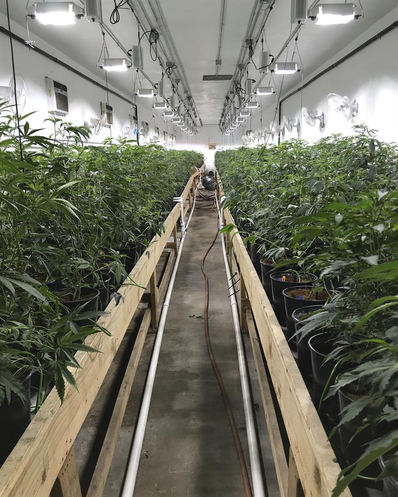 California police bust multimillion-dollar weed 'fortress