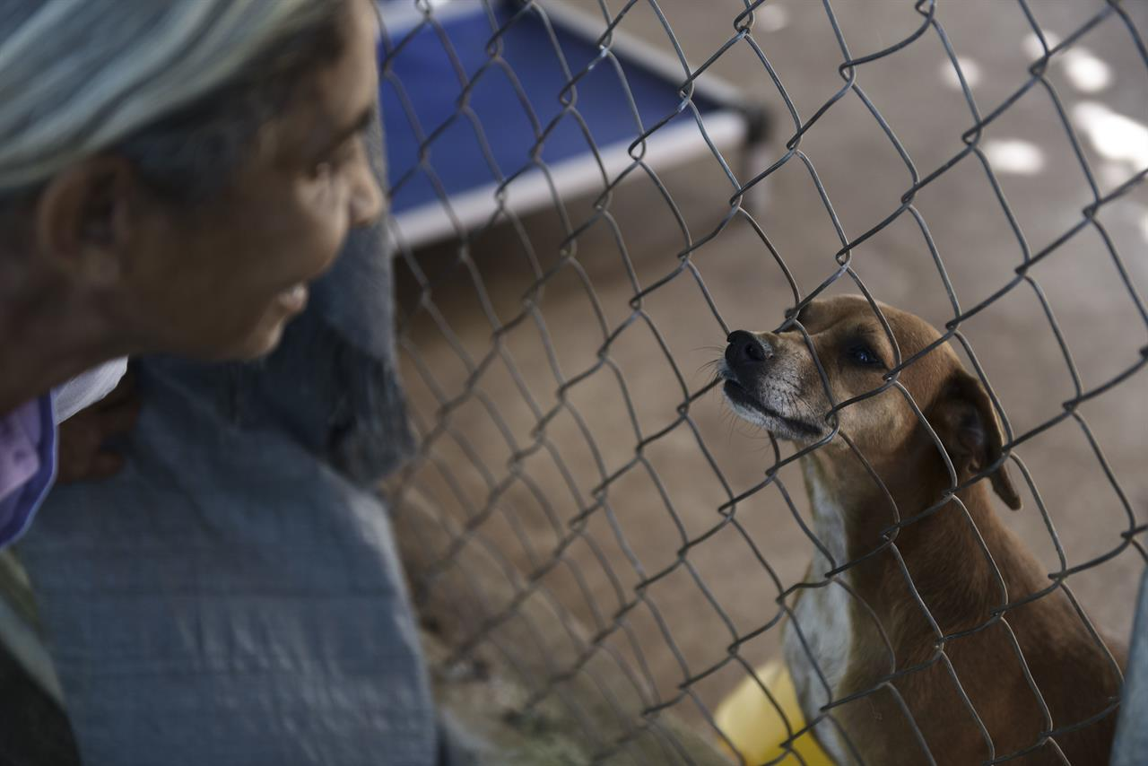 Abandoned Pets Swamp Shelters In Post Hurricane Puerto