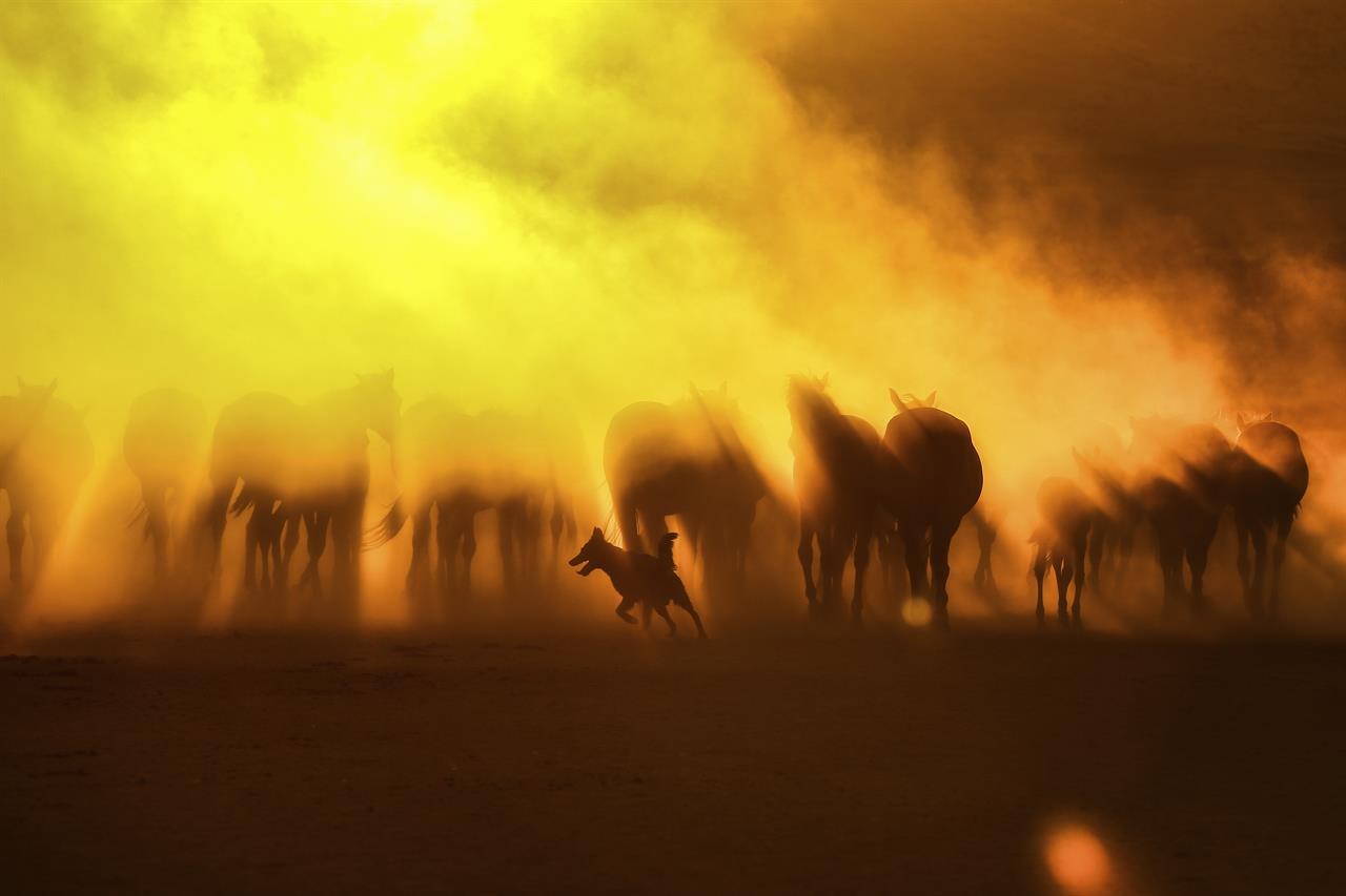 AP PHOTOS: Untamed horses roam in Turkish foothills | KDOW-AM - San