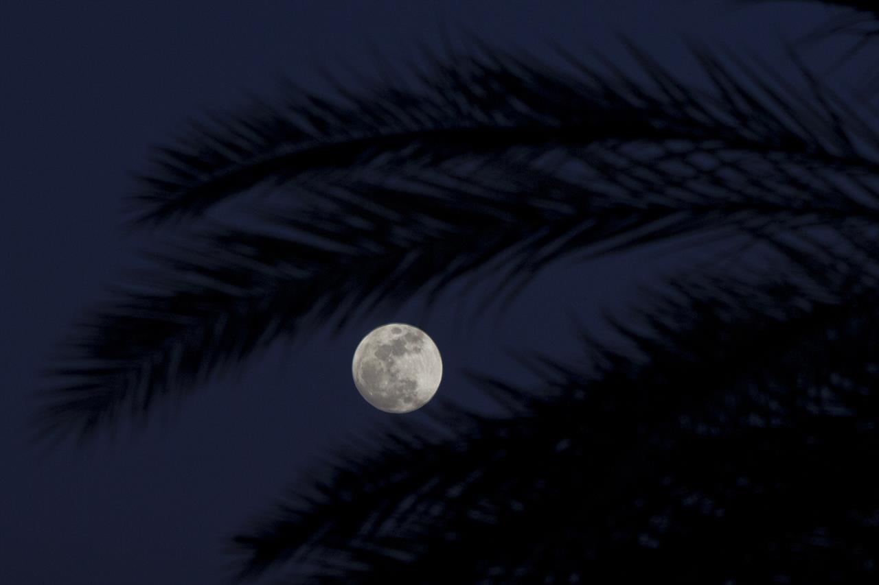 blood moon viewing fl - photo #47