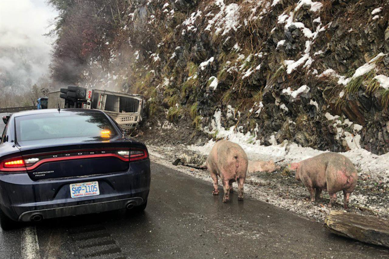 The Latest: Pig truck crash adds to traffic woes after storm | The