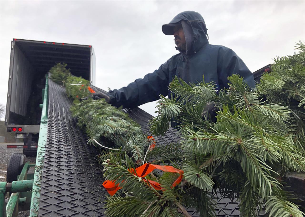 ... Christmas tree farmers aim to boost sales via social media ...