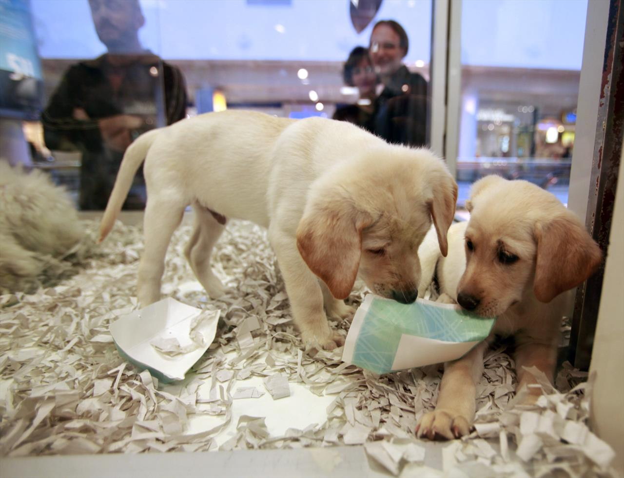 UK bans pet shops from selling puppies and kittens | The