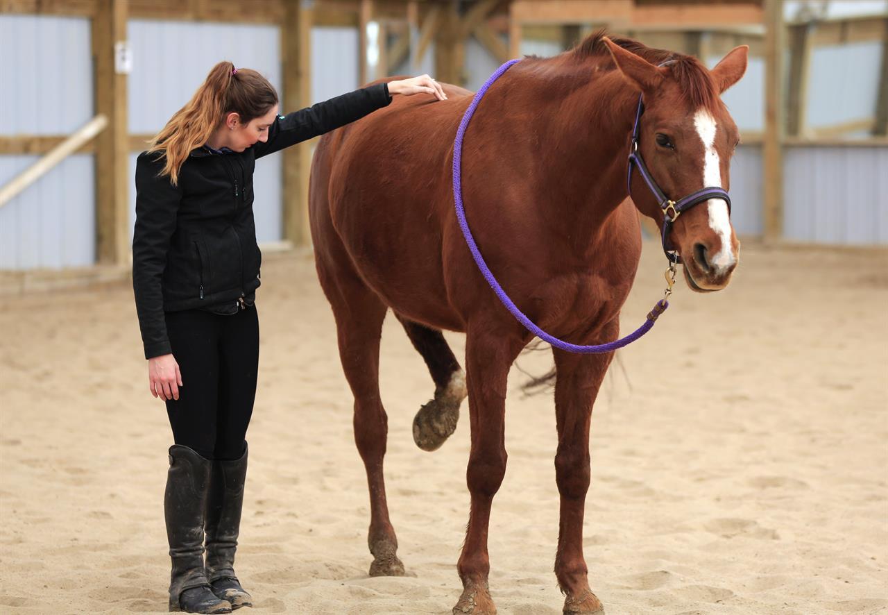 A Little Tight Nebraska Could End Horse Massage Licensing Am 1070