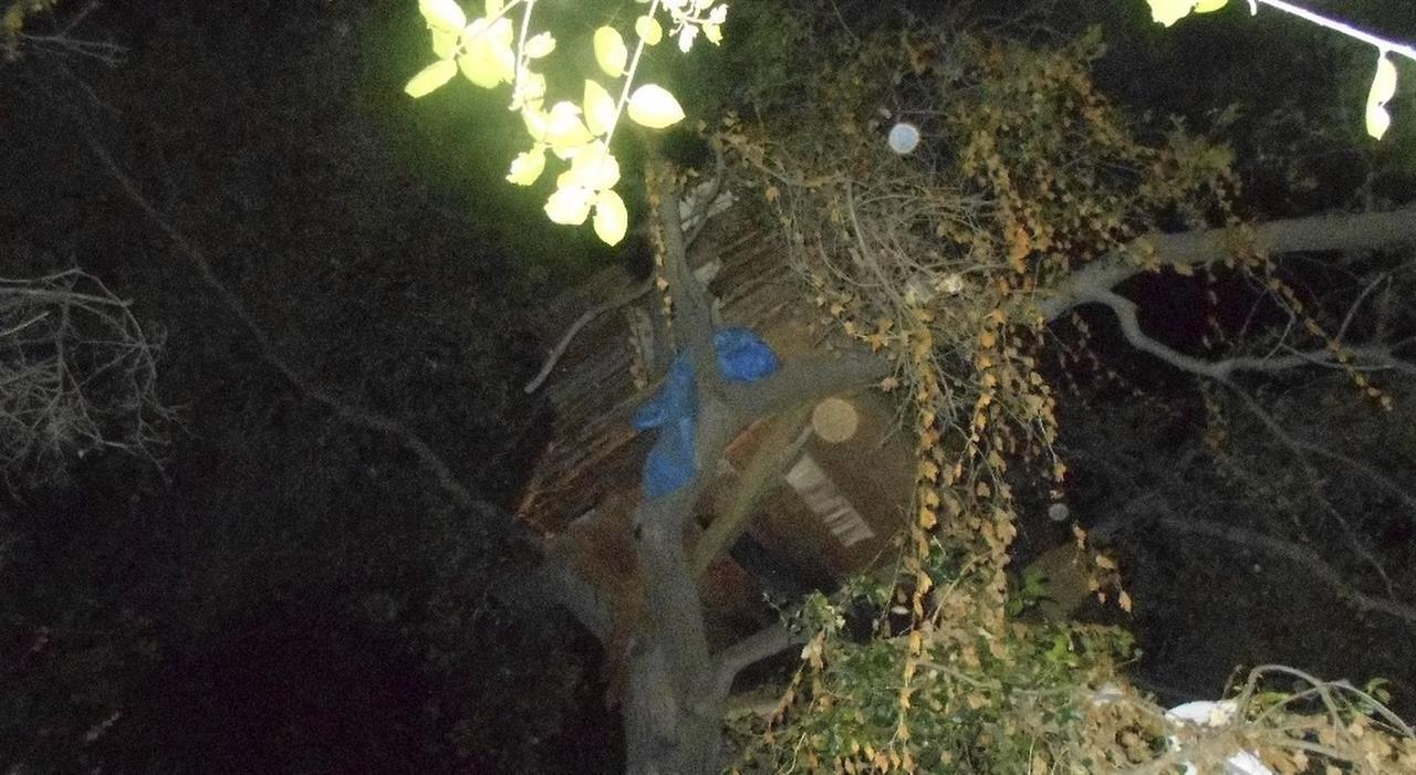 Burglary suspect found living in 'modern' treehouse   AM