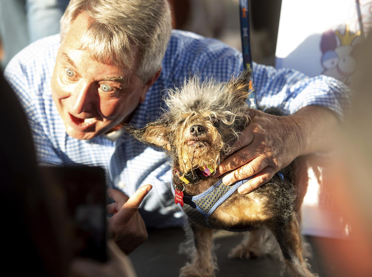 Scamp the Tramp wins World's Ugliest Dog Contest   The