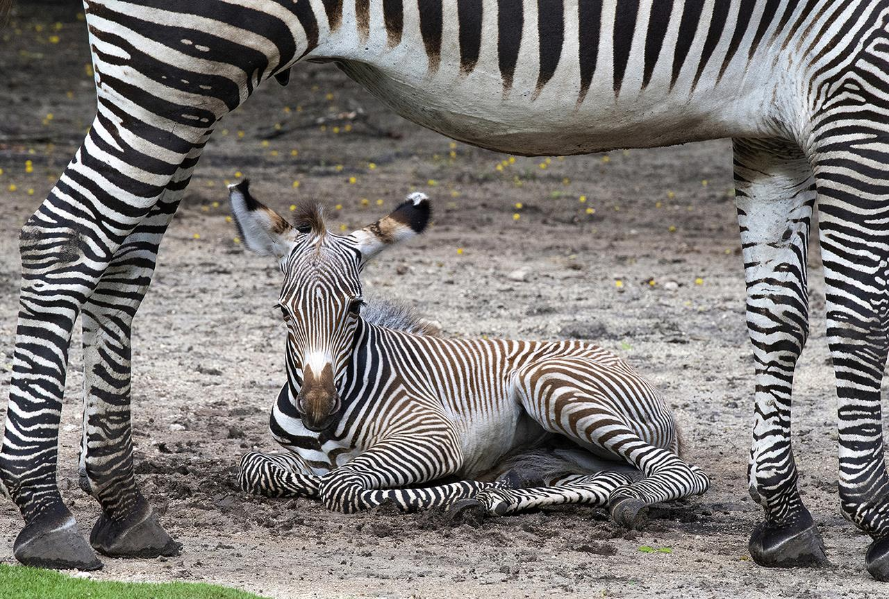 There's a baby boom at Zoo Miami with 6 births in 7 days