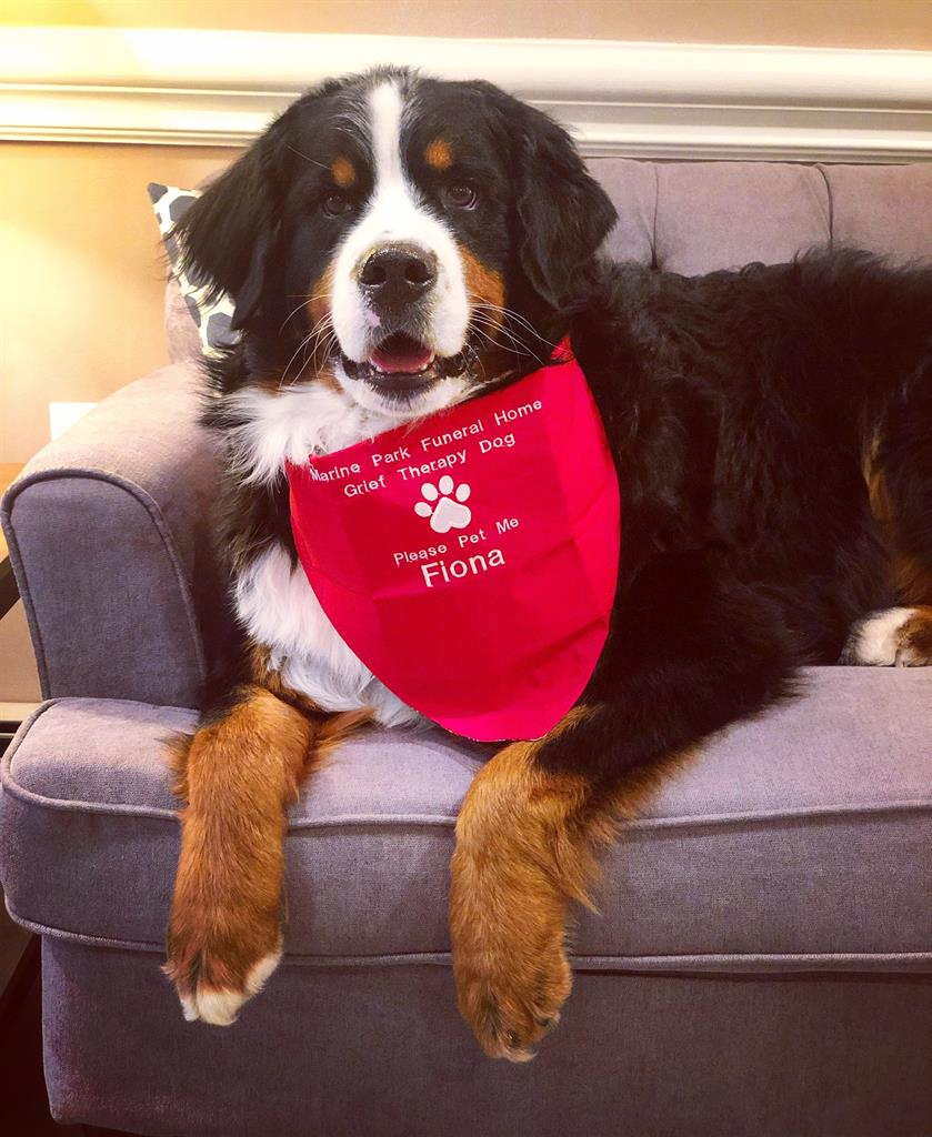 NYC funeral home dog is 1 millionth 'canine good citizen