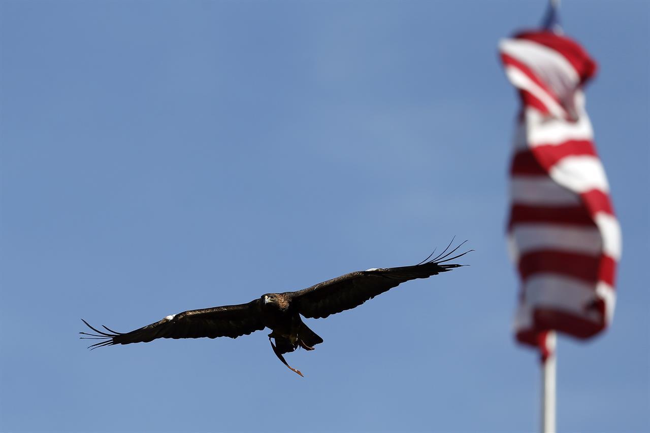 Auburn retiring golden eagle mascot Nova