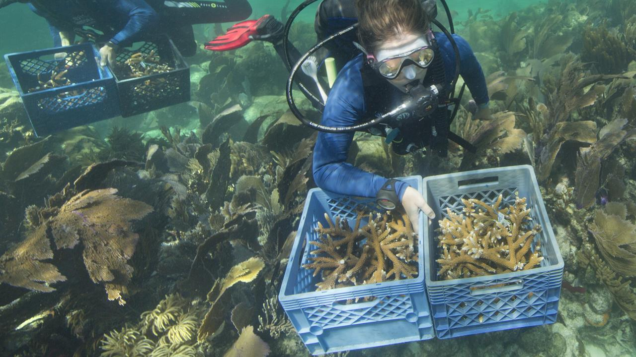 Officials want $100M for reef restoration in Florida Keys