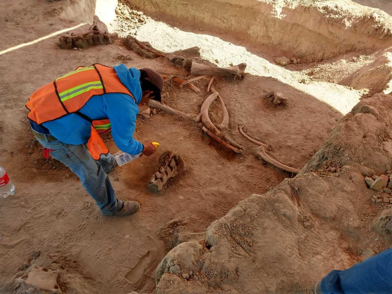 In Mexico City, experts find bones of dozens of mammoths