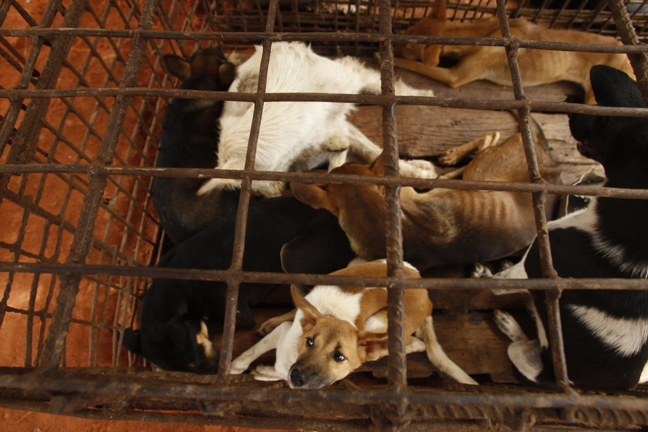 Cambodian butcher quits dog meat trade, shuts slaughterhouse