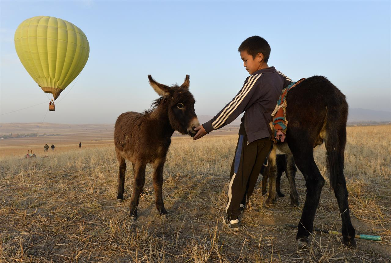 A Kyrgyz boy pets a donkey as other people launch a balloon at sunset outside Tash-Dyobyo village, 12 kilometers (7,5 miles) south of Bishkek, Kyrgyzstan, Saturday, Oct. 17, 2020. The political turmoil that has gripped Kyrgyzstan hasn't reached this quiet village in the mountains near the capital, where residents talk about the country's feuding elites with resignation and disdain.(AP Photo/Vladimir Voronin)