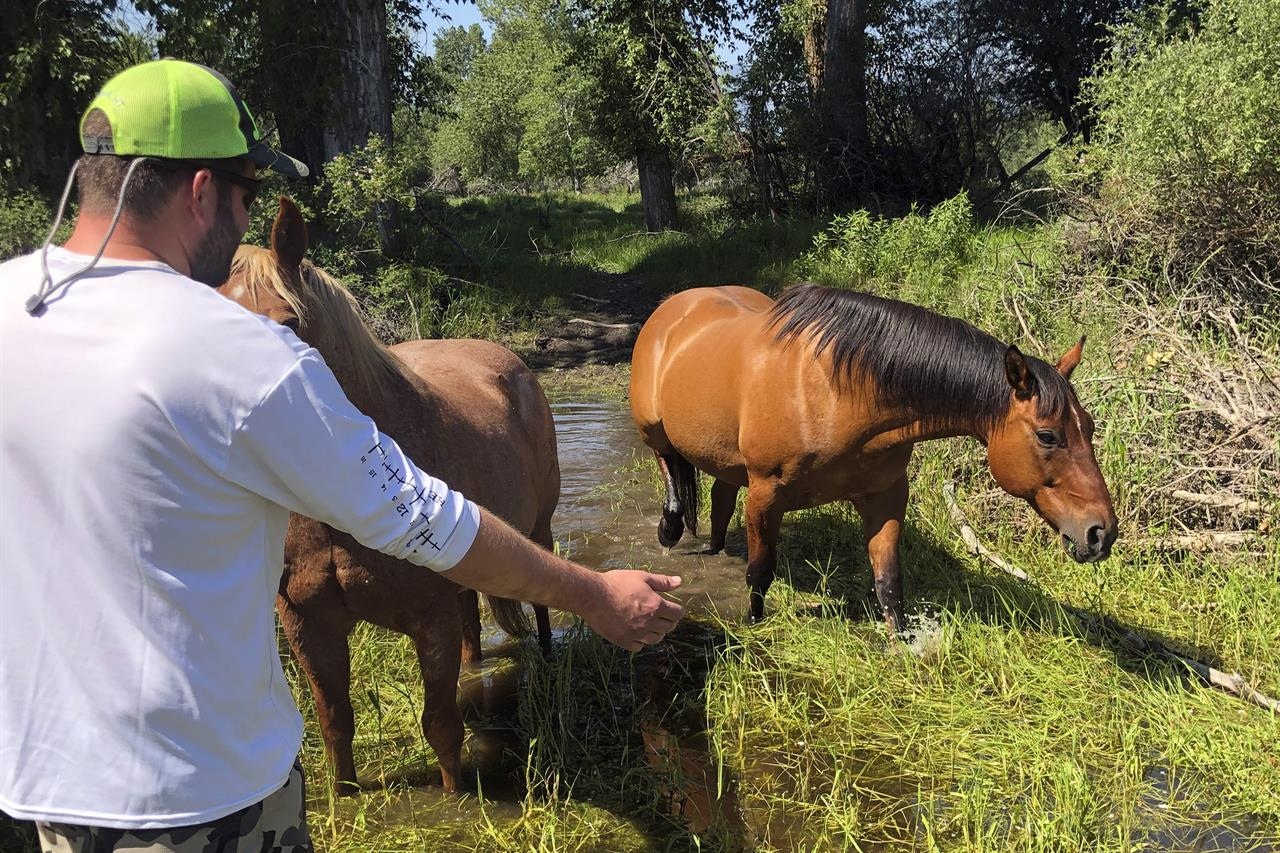 Matthew Eickholt of Hamilton, Mont, greets a horse, left, on Tuesday, June 22, 2021, two days after he and his wife rescued the horse from drowning in the Bitterroot River north of Victor, Mont. They coaxed the struggling horse into shallower water to a spot where it could get out of the river. (Christina Eickholt via AP)