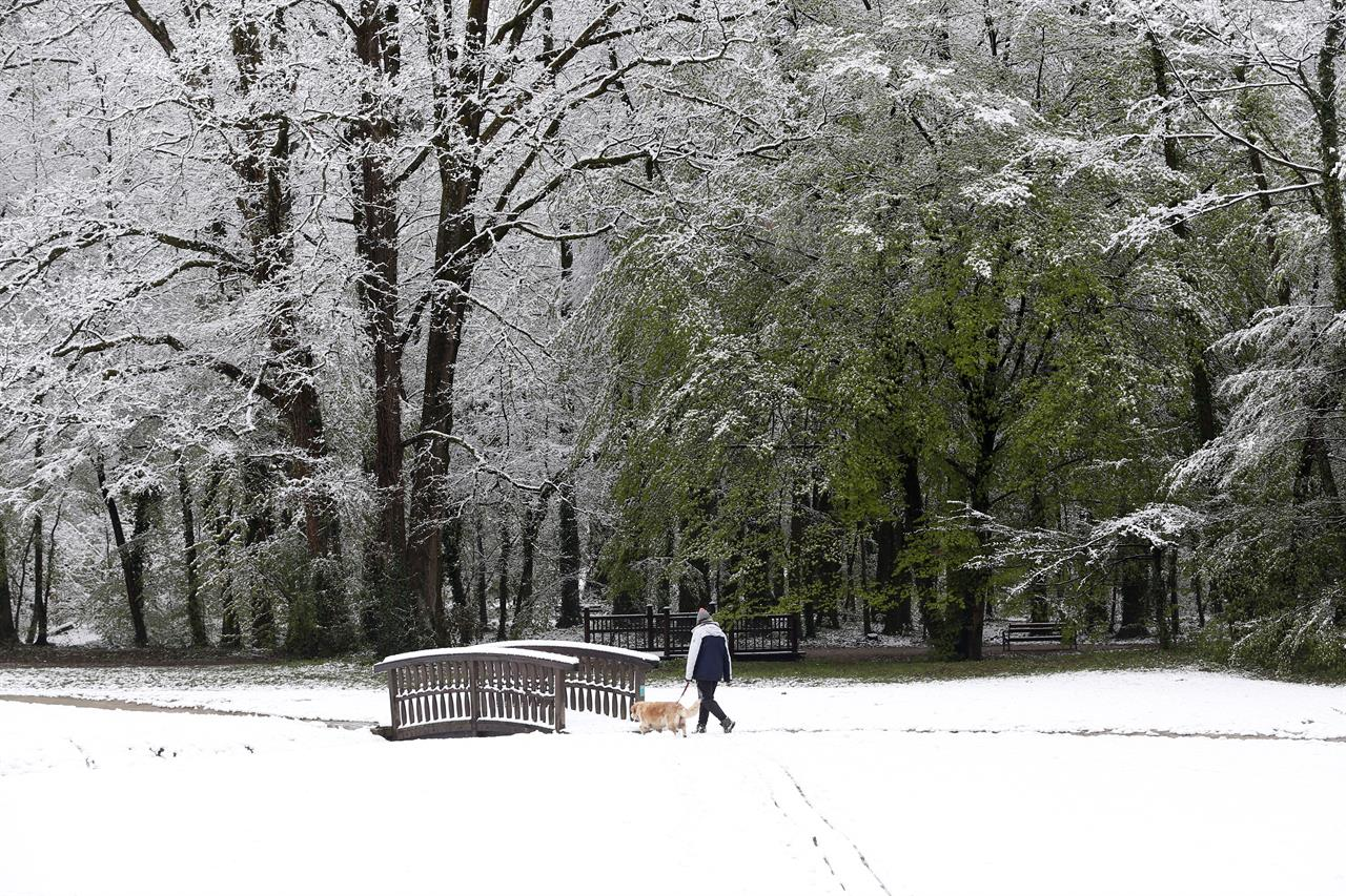 A person walks a dog in a park after a snowfall in Zagreb, Croatia, Tuesday, April 6, 2021. (AP Photo/Darko Bandic)